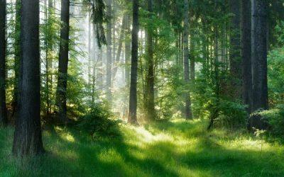 Loi Climat : améliorer la gestion durable des bois et forêts
